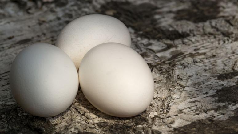 eggs-14