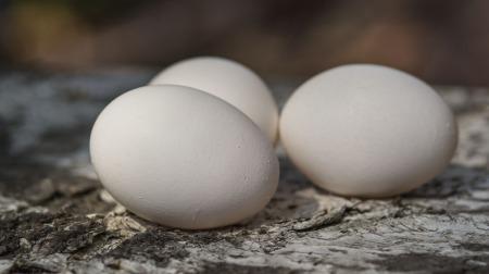 eggs-15