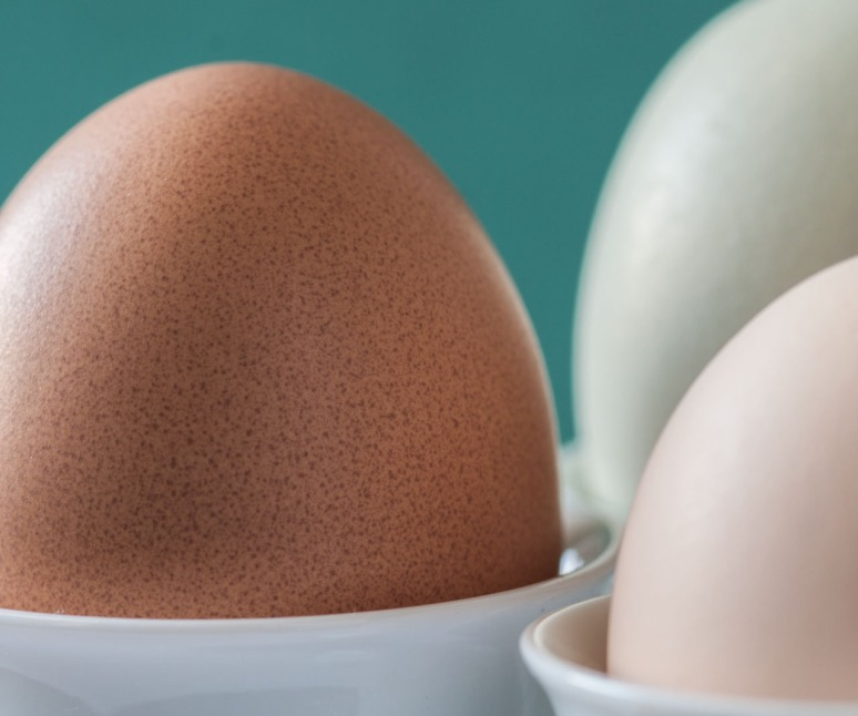 Harvest Hills eggs 5
