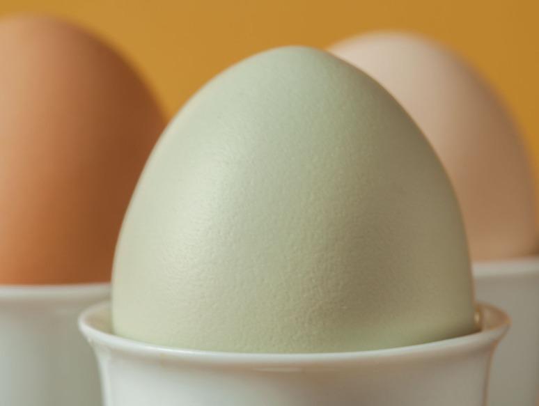 Harvest Hills eggs 6