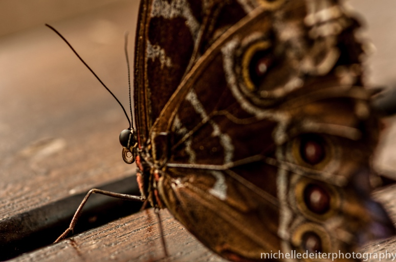 butteflies 2-2