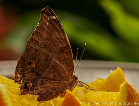 butteflies 2