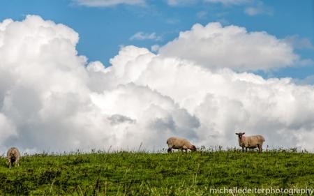 Ireland- high country-3