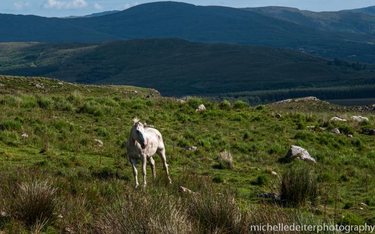 Ireland-horse