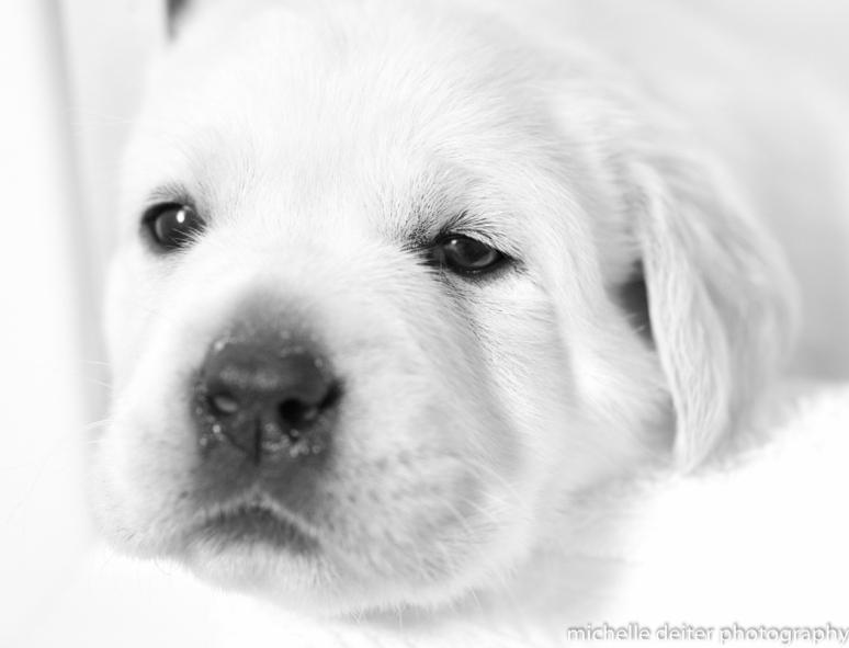 puppy love 2-3