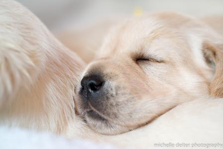 puppy love-2