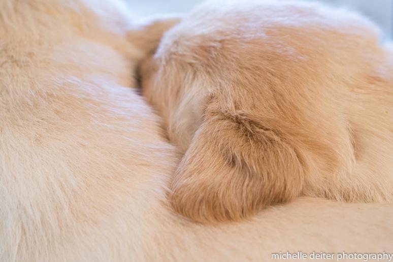 puppy love-4