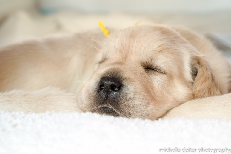 puppy love-9